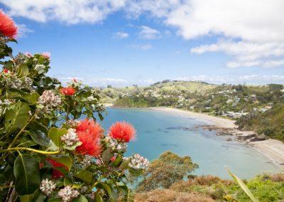 Waiheke Tours with Waivino, Scenic Tours Waiheke