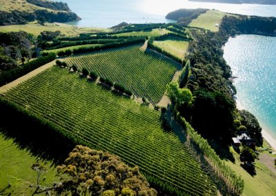 Best Waiheke Wine Tours with Waivino, Scenic Tours Waiheke