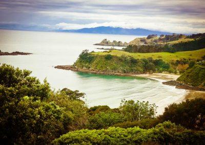 Waivino Wine Tours Scenic Tours Waiheke Island