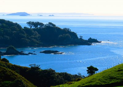 Best Waiheke Wine Tours