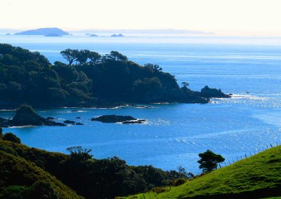 Waiheke Wine Tours and Scenic Tours